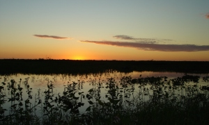 Sunset in the marshes