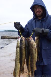 Pike and Walleye